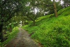 Gå i djungeln Royaltyfri Fotografi