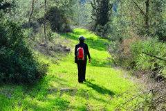Gå i en härlig skog Royaltyfria Foton