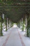 Gå i en parkera royaltyfri foto