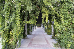 Gå i en parkera royaltyfria foton