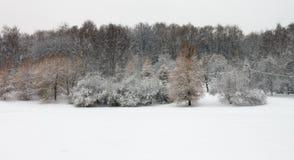 Gå i en snöig dag Arkivbild