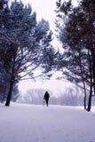 Gå i en vinterunderland Royaltyfria Foton
