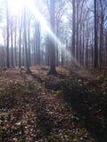 Gå i Forêten de Soignes Arkivbild