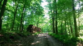 Gå i grön skog i solig dag i sommar lager videofilmer