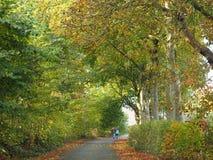 Gå i hösten Arkivbild