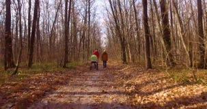 Gå i höstskogen stock video