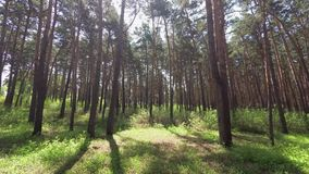 Gå i pinjeskogen arkivfilmer