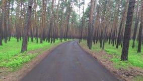 Gå i pinjeskogen stock video