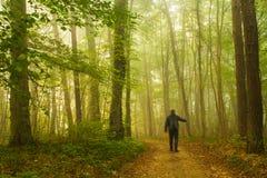 Gå i skog royaltyfria bilder