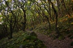Gå i skogen Royaltyfri Foto
