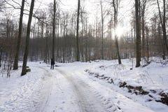 Gå i winterly skog arkivfoton