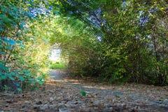 Gå ingången med gröna träd royaltyfri bild