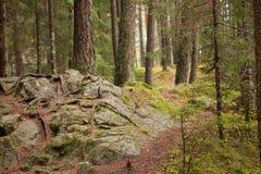 Gå inom skogen, inga personer omkring Royaltyfri Bild
