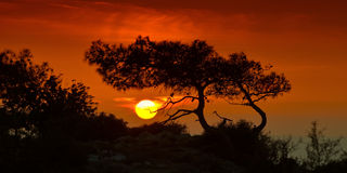 Gå inte, att vänta! Solnedgång med en kontur av ett träd cyprus Royaltyfri Foto
