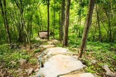 Gå långt i skogen Arkivfoto