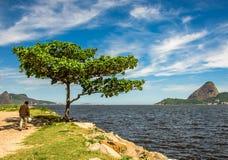 Gå mannen i skuggan av de gröna träd- och Guanabara fjärdwina arkivbild