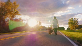 Gå med en hund i solnedgången Den unga kvinnan är på den australiska herdehunden för koppeln mot en härlig himmel på ett klart stock video