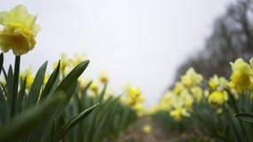 Gå mellan blommor arkivfilmer