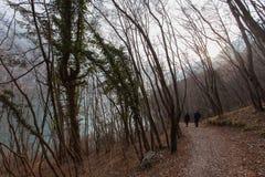 Gå nära sjön i en skog med vikta träd arkivbild