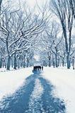 Gå på en bana i Central Park i vinter Arkivfoton