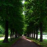 Gå på skogen Royaltyfria Foton