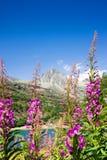 G? runt om Sils sj?n - den Engadine dalen - Schweiz - Europa arkivfoto