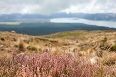Gå siktar på den norr ön, Nya Zeeland Royaltyfria Bilder