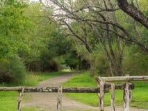 Gå slingor i ett tysta, fridfulla fridsamma Forest Park med vibrerande gröna träd och vegetation royaltyfri foto