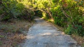 Gå slingor i ett tysta, fridfulla fridsamma Forest Park med vibrerande gröna träd och vegetation royaltyfria foton
