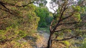 Gå slingor i ett tysta, fridfulla fridsamma Forest Park med vibrerande gröna träd och vegetation arkivbild