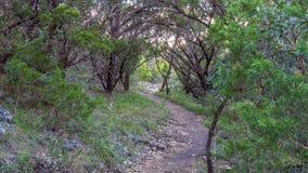 Gå slingor i ett tysta, fridfulla fridsamma Forest Park med vibrerande gröna träd och vegetation arkivfoto