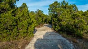 Gå slingor i ett tysta, fridfulla fridsamma Forest Park med vibrerande gröna träd och vegetation arkivbilder