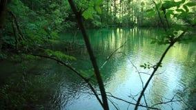 Gå till och med bergskog nära till sjön, Sikt från Plitvice sjöar arkivfilmer