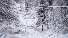 Gå till och med den snöig banan i vinterskog stock video