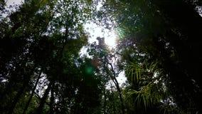 Gå till och med en tropisk skog arkivfilmer