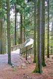 Gå till och med skogöverkanten Arkivfoton
