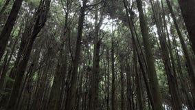 Gå till och med skog i Alishan sceniskt område med mist, ogenomskinlighet och dimma i Taiwan stock video