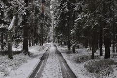 Gå till och med snöig vinterskog Arkivfoto