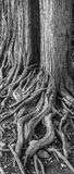 Gå träd Arkivbilder