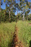 Gå trail i Townsville Arkivbilder