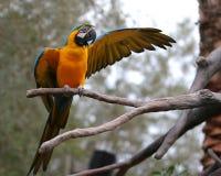 gå ut från den vänstra papegojaetappen Arkivfoto