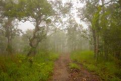 Gå vägen i nationalpark med dimmigt klimat arkivbild