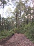 Gå vägen in i skogen, väg mycket av blad royaltyfri bild