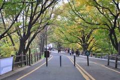 Gå vägen till det Seoul tornet Royaltyfria Foton
