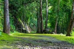 Gå vägen till naturen i nationalpark Arkivbilder