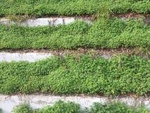 Gå växa på, murgröna på flyttningen Royaltyfri Bild