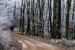 gå vintern Fotografering för Bildbyråer
