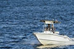 Gående fiska i vråkfjärd Arkivfoton