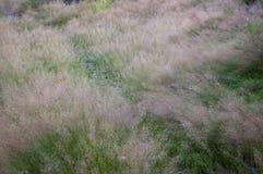 Gångbana i gräset Arkivfoton
