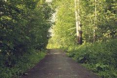 Gångbana i mitt av ett tema för sommarskognatur arkivbild
